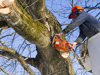 Lolley's Tree Service worker using train saw to cut tree branch off